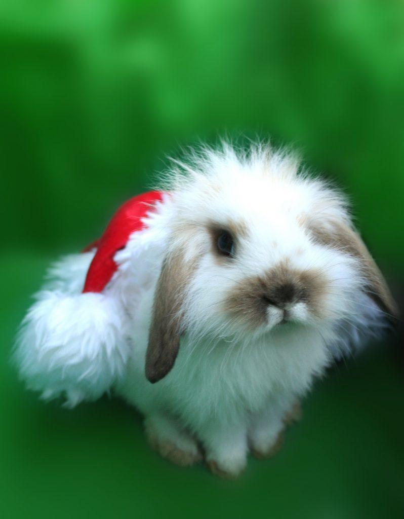xmas-bunny-1313404-1279x1640