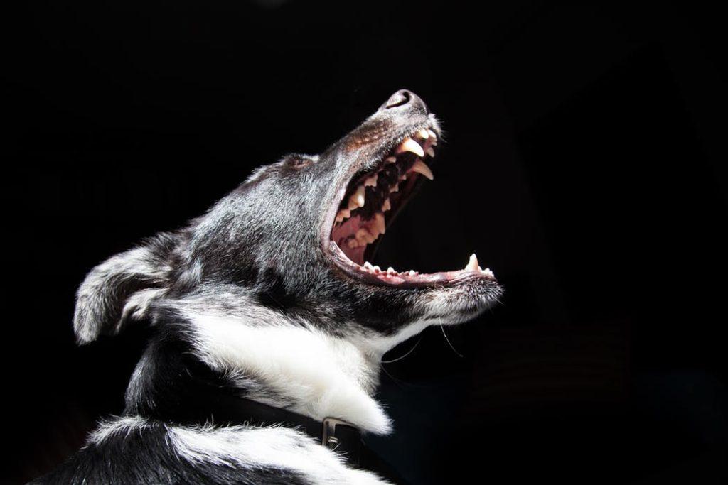 pet nursing dental disease