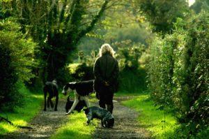 Why You Should Walk Your Dog Everyday pet nursing pet services Saltdean Brighton peacehaven