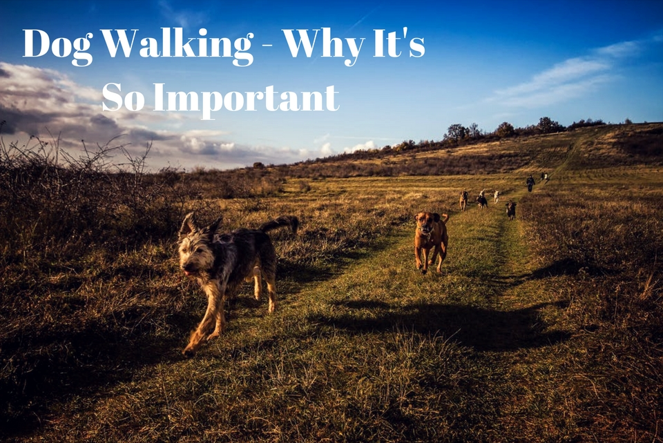 Why You Should Walk Your Dog Everyday